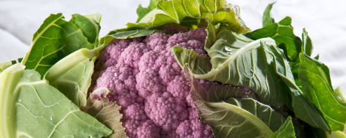 Cauliflower ~ Graffiti (Purple) (June)