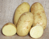 Charlotte AGM - 1kg bag - Organic seed potato (February)