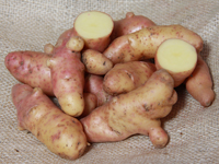 Conventional Pink Fir Apple - 1kg bag - Conventional seed potato (February)